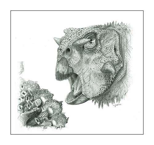 Une reconstitution d'un Psittacosaurus gobiensis. Crédit : Todd Marshall