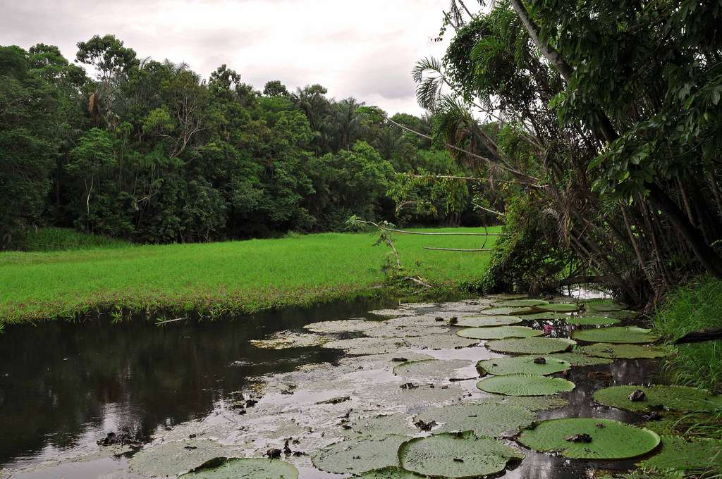 Selon une étude publiée en 2008, le fleuve Amazone coule sur précisément 6.992,06 kilomètres, ce qui en fait le plus long du monde. © marek.krzystkiewicz, Flickr, cc by 2.0