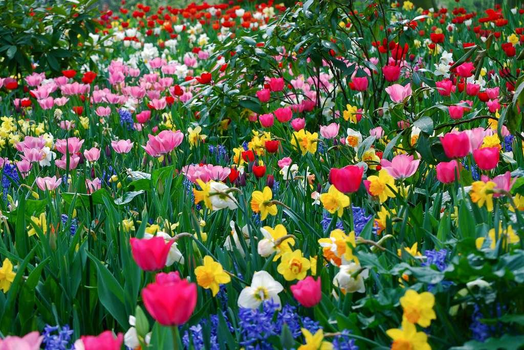 Entretenir un jardin prend du temps. Les gens pressés trouveront de nombreux conseils pour utiliser leur temps au mieux pour leur carré de verdure. © Paul Appleyard, Flickr, cc by nc sa 2.0