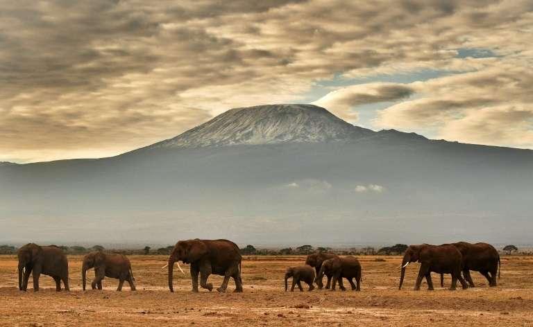 Quelque 30.000 éléphants africains sont victimes chaque année de braconnage. Sur cette photo, prise en novembre 2016, un troupeau d'éléphants dans le parc Amboseli, avec le Kilimandjaro en toile de fond. © Carl de Souza, AFP, Archives