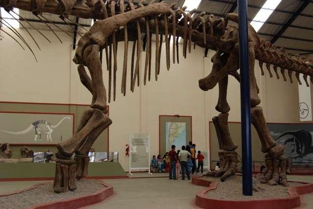 L'Argentinosaurus est l'un des plus grands dinosaures connus. On voit ici une partie de son squelette à côté de quelques Homo sapiens. Crédit : Michael J. Ryan
