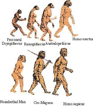 Evolution de l'homme préhistoriqueAttention : Homo Sapiens ne descend pas de l'Homme de Néanderthal, même s'ils ont un ancêtre commun.Crédit : http://www.pinkmonkey.com