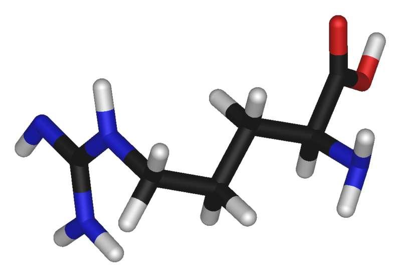 L'arginine est un acide aminé basique (carbone en noir, oxygène en rouge, azote en bleu, hydrogène en blanc). © Photohound, domaine public