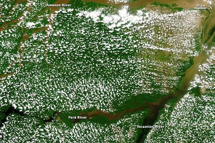 Les nuages « popcorn » que l'on voit ici au-dessus de la forêt amazonienne le 19 août 2009 se forment pendant la saison sèche. Ils apparaissent probablement à partir de la vapeur d'eau libérée par les plantes. © Nasa's Earth Observatory