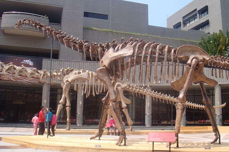 Ces squelettes de Huanghetitan liujiaxiaensis et de Daxiatitan binglingi, deux titanosaures, ont été reconstitués à partir de restes fossiles découverts à moins de 1 km du site où a été exhumé Yongjinglong datangi. Il y a 10 ans, personne ne connaissait l'existence de ces trois géants herbivores. © Tiouraren, Wikimedia Commons, cc by sa 3.0