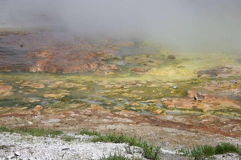Beaucoup d'archées vivent dans les sources chaudes de Yellostone. © Wing-Chi Poon, Wikipédia CC by sa 2.0