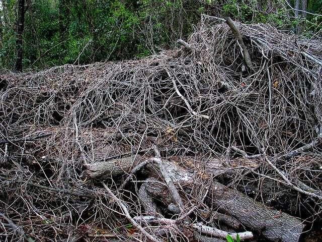 Les déchets végétaux, voire la sciure de bois, sont de bonnes sources pour les agrocarburants parce qu'ils n'entrent pas en concurrence avec les cultures alimentaires. Encore faut-il que les procédés de transformation en hydrocarbures soient efficaces et pas trop coûteux. C'est possible... © cdsessums, Flickr, cc by 2.0