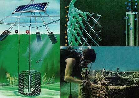 A gauche : le dispositif Biorock peut s'installer au large ou dans des régions dépourvues de réseau électrique ou de générateur. Il est alors alimenté par des panneaux solaires. A droite et en haut : lors de l'application du courant, un phénomène d'électrolyse provoque le dépôt de CaCO3 sur les structures métalliques. A droite et en bas : photographie montrant ce dispositif en milieu naturel. © Biorock.net