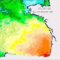 Cette image correspond à la température décadaire moyenne sur 11 ans, de 1985 à 1995, du 30 juillet au 8 août. L'échelle des couleurs est saturée à 23°C en août 2003 sur une grande partie du Golfe. Un tel niveau de températures a déjà été observé mais rar