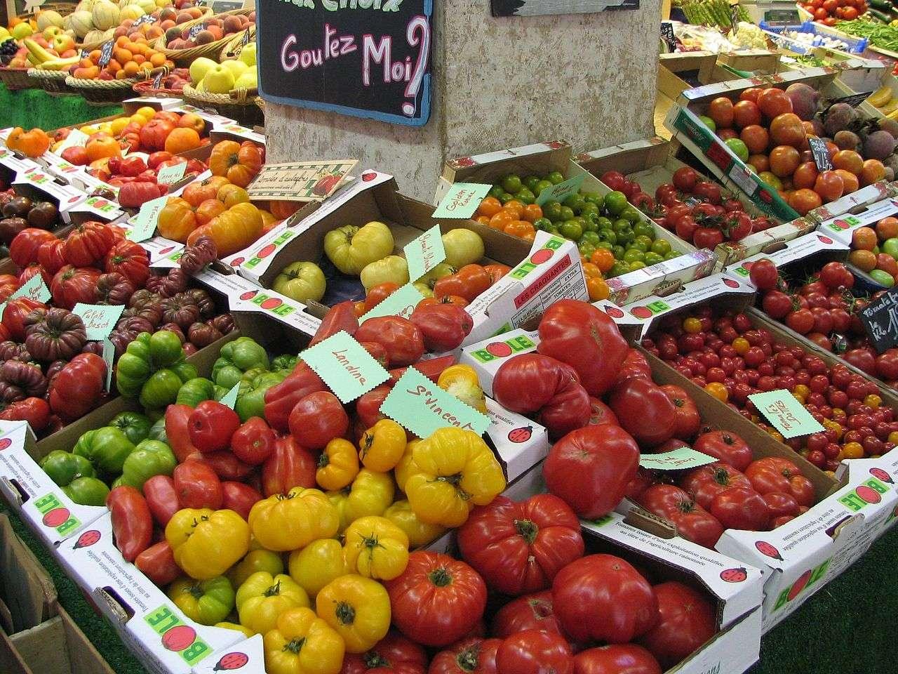 Comme le montre cette photo, il existe une grande variété de tomates. FW13, créée par hybridation après plusieurs années de recherche par Syngenta, s'ajoute à la liste, mais elle fera figure d'originale avec sa couleur jaune et son aspect de fruit confit. © cc by 3.0, Wikipédia