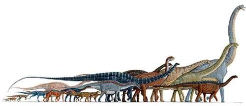 Des sauropodes, dinosaures géants du Crétacé. © DR