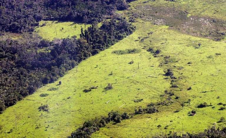 Au Brésil, 7.900 km2 de forêt ont été détruits en un an, soit l'équivalent d'un million de terrains de foot. © Anatonio Scorza - AFP/Archives