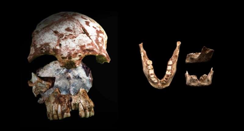 Les fossiles de la grotte de Tam Pa Ling révèlent aujourd'hui leurs secrets. Si le crâne possède une morphologie moderne, la mandibule a quant à elle des traits morphologiques à la fois archaïques et modernes. © Fabrice Demeter