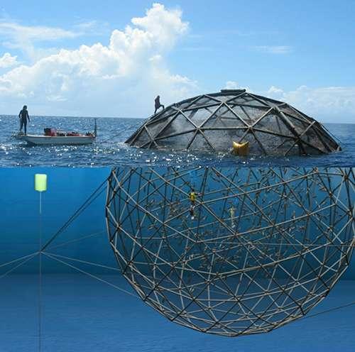 Les 34 Aquapod actuellement déployés peuvent être observés à Puerto Rico, en Indonésie, à Panama, en Floride et à Hawaï. © Ocean Farm Technologies