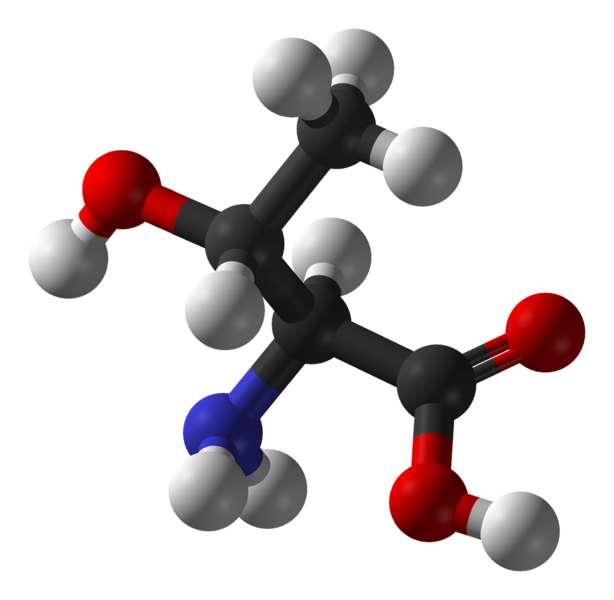 La thréonine est un acide aminé essentiel. © Ben Mills, Wikimedia, domaine public