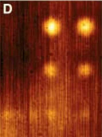 Image de microscopie en champ proche avec une superlentille.