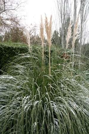 Le jardin en hiver mérite d'être protégé... © Ismael Montero Verdu