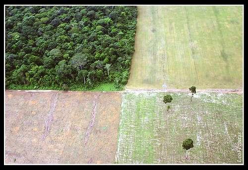 La déforestation en Amazonie semble être repartie à la hausse, notamment au profit d'exploitations agricoles, en particulier de soja, comme sur cette photo prise au Brésil, dans l'Etat de Pará. En juin 2008, les exportateurs brésiliens signaient un moratoire dans lequel ils s'engageaient à ne pas acheter du soja provenant de zones récemment déboisées. © Leoffreitas / Flickr - Licence Creative Common (by-nc-sa 2.0)