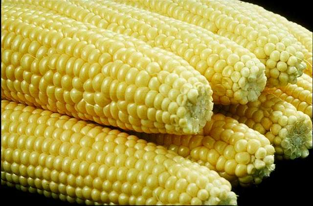 Epis de maïs. Source : United States Department of Agriculture