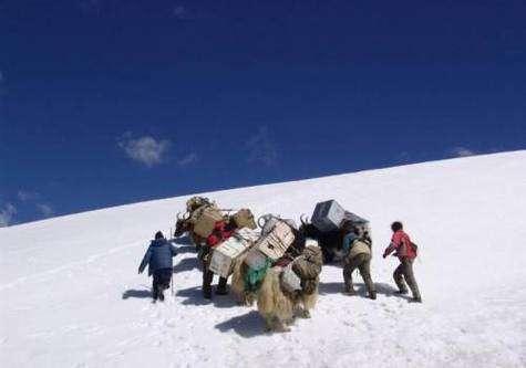 Les glaciologues chinois et leurs yacks à l'assaut du glacier East Rongbuk, près du Col Nord de Sagarmatha (en népalais), alias Chomolungma (en tibétain), alias mont Everest. Crédit : Shugui Hou/Careeri/Chine
