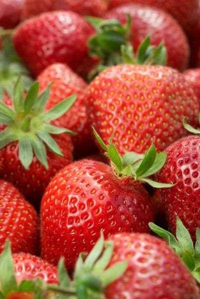 Les facultés cognitives déclineraient moins vite chez les personnes consommant plus d'une part de fraises par mois. © abimages/shutterstock.com