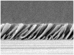 Au microscope électronique, on distingue les minuscules baguettes de silicium inclinées à 45°. Crédit : Fred Schubert / Rensselaer Polytechnic Institute