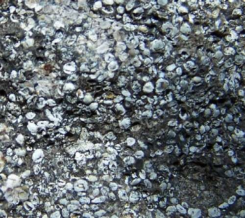 Roche phosphatée oolithique datée du Permien (Montana, USA). © Richard I. Gibson CC by sa 3.0
