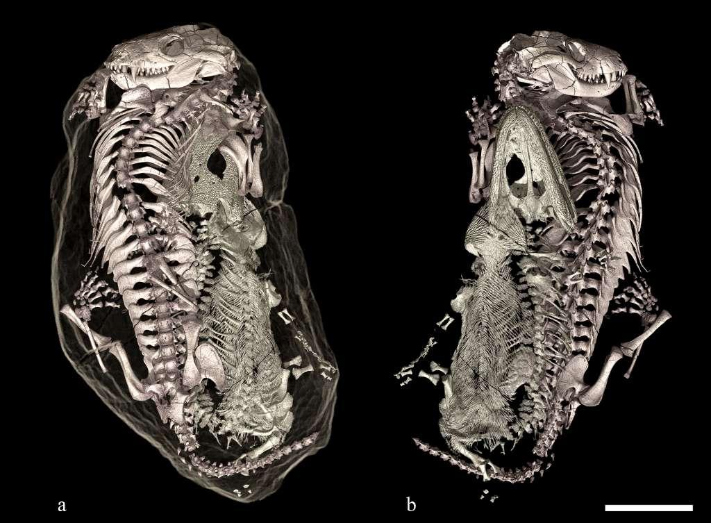 Le développement récent de l'imagerie à rayons X à l'ESRF a permis d'analyser le contenu du terrier et de créer des images 3D sans endommager les fossiles à l'intérieur. © Vincent Fernandez, ESRF