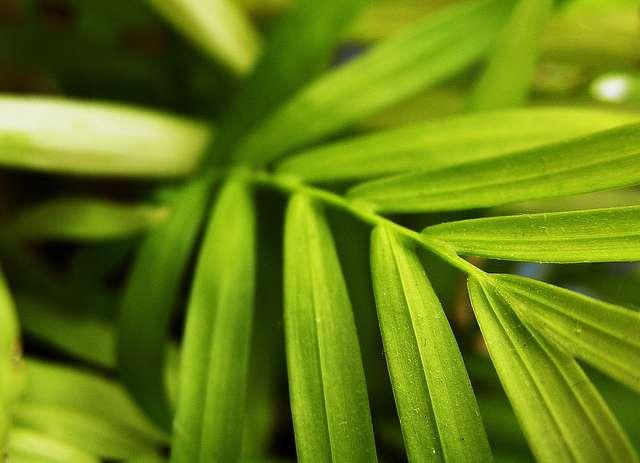 Actuellement, près de 300.000 espèces de la lignée verte utilisent la photosynthèse. © Claire Brownlow, Flickr, cc by nc nd 2.0