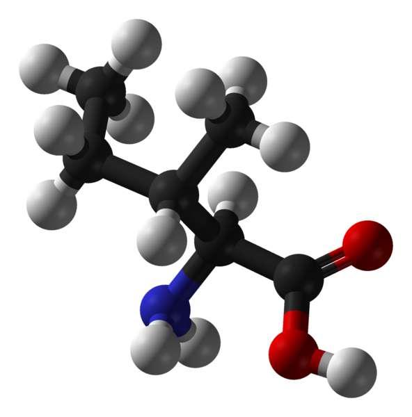 L'isoleucine est un acide aminé essentiel (carbone en noir, oxygène en rouge, azote en bleu et hydrogène en blanc). © Domaine public