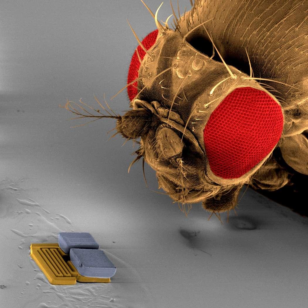 Un Mems, mesurant 300 micromètres de longueur, mis au point par l'équipe suisse ETH Zurich qui a participé à la RoboCup 2009. © ETH Zurich