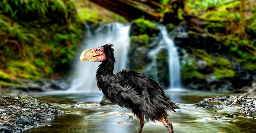 Mâle Gastornis. © Auntspray, Fotolia