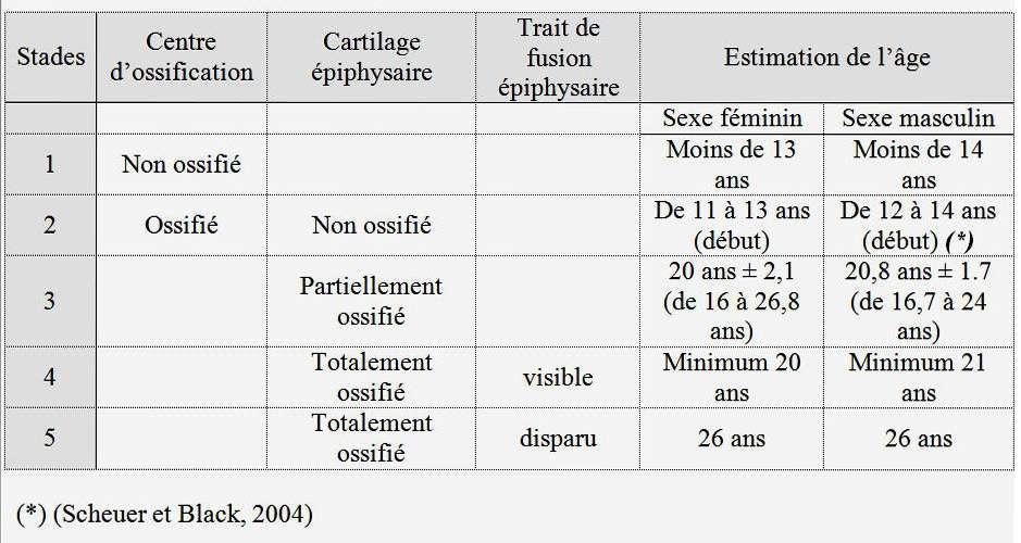 Évolution du centre d'ossification de l'extrémité médiale de la clavicule (Schmeling et al., 2004). © DR