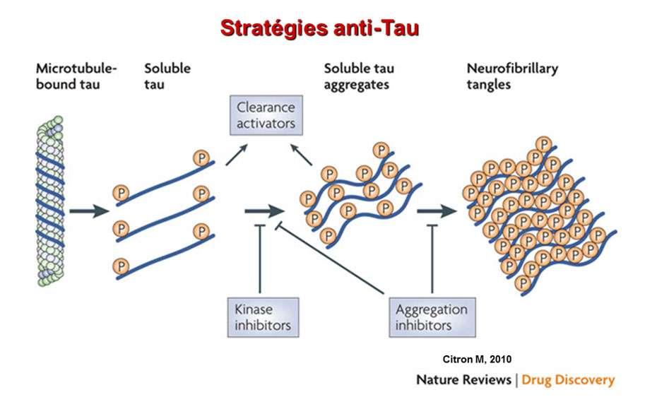 La maladie d'Alzheimer se caractérise notamment par l'accumulation anormale de protéine Tau. © DR