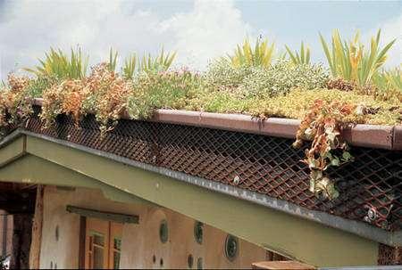 Faune et flore cohabitent dans un toit végétalisé. © Clarke Snell