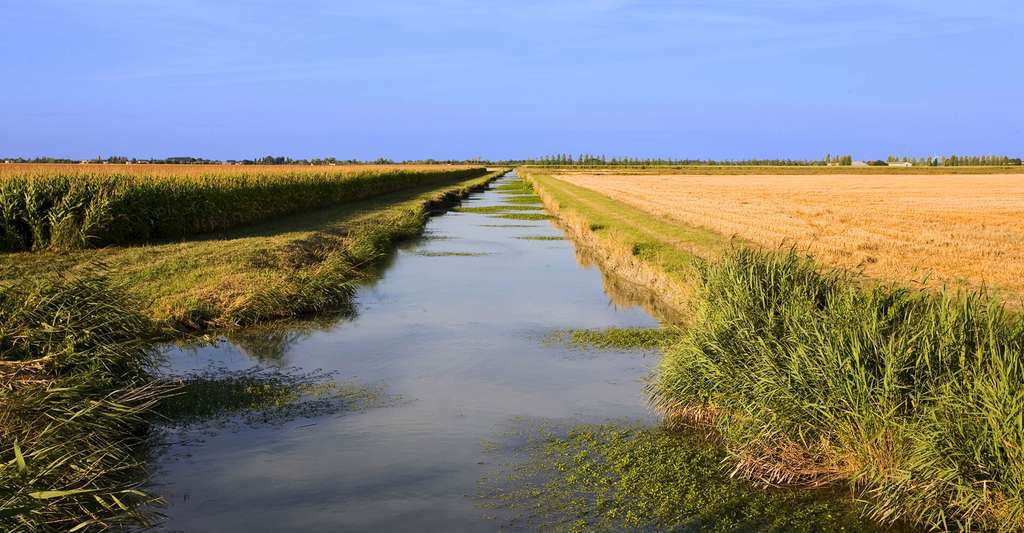 Vue sur le marais poitevin : canal et champs. © JONATHAN, Fotolia