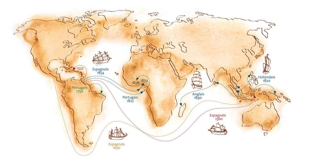 Le voyage du cacao au cours des colonisations. © Gwendolin Butter