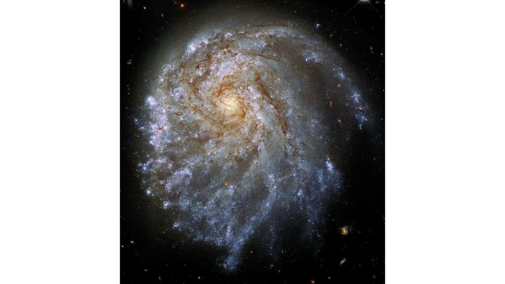 Une galaxie spirale, c'est un peu comme un œuf sur le plat. NGC 2276, elle, a l'air d'avoir glissé de la poêle. Avec son jaune — le renflement central d'étoiles vieillissantes — décalé dans un coin. © Hubble