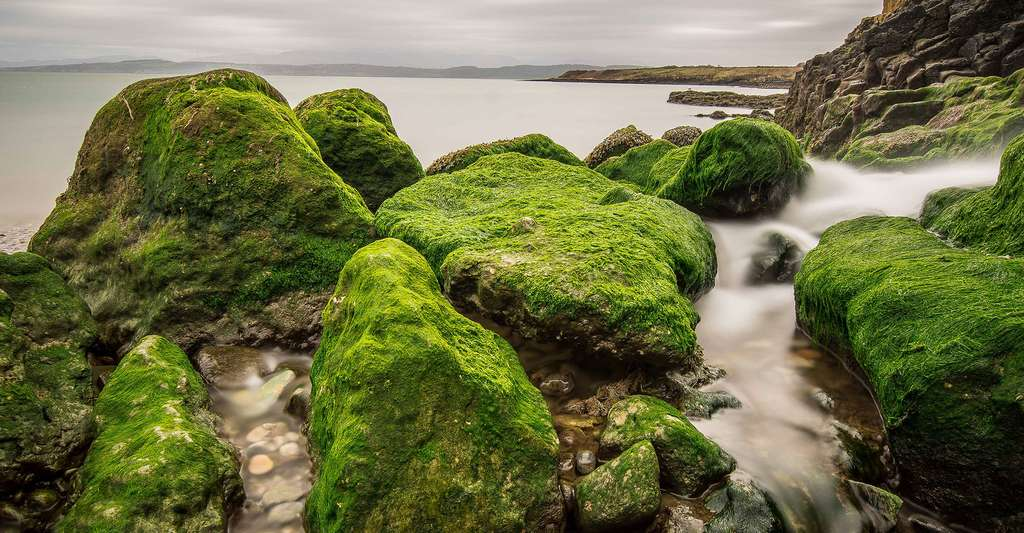 Les algues sont de fabuleux végétaux aquatiques. © Nic Taylor, Flickr, CC by-nc 2.0