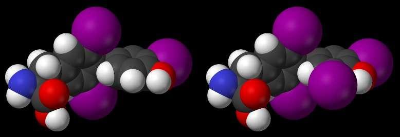 Les hormones thyroïdiennes (triiodothyronine et tétra-iodothyronine) contiennent respectivement trois et quatre atomes d'iode (en violet). © Domaine public