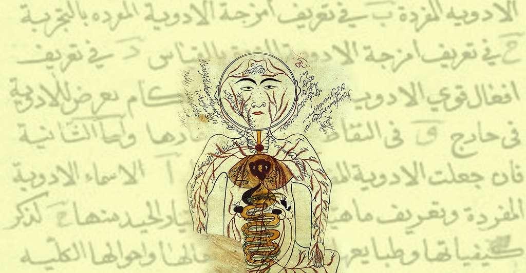 Les organes internes selon le Canon d'Avicenne, publié à Ispahan (Iran). © Wellcome Images, Wikimedia commons, CC by 4.0