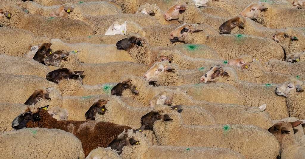 Des chercheurs de l'université de Stanford (États-Unis) envisagent de capturer le méthane atmosphérique – comme celui émis par l'élevage – pour le transformer en CO2. Même si le CO2 est un gaz à effet de serre, l'opération serait utile à limiter le réchauffement climatique. © Couleur, Pixabay License