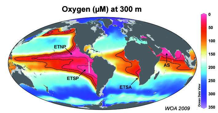 Zones océaniques de minimum d'oxygène (au niveau des flèches). La barre de couleur indique les concentrations d'oxygène dissous en µM, ou 10-6 mol/L (mole par litre), à une profondeur de 300 m. Environ 30 à 50 % des pertes d'azote ont lieu dans ces zones, qui ne représentent que 0,1 % du volume de l'océan. © World Ocean Atlas 2009