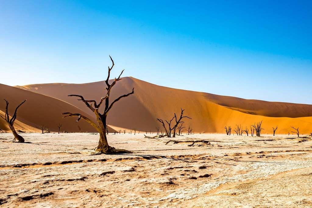 Le Deadvlei, un marais mort au cœur du désert