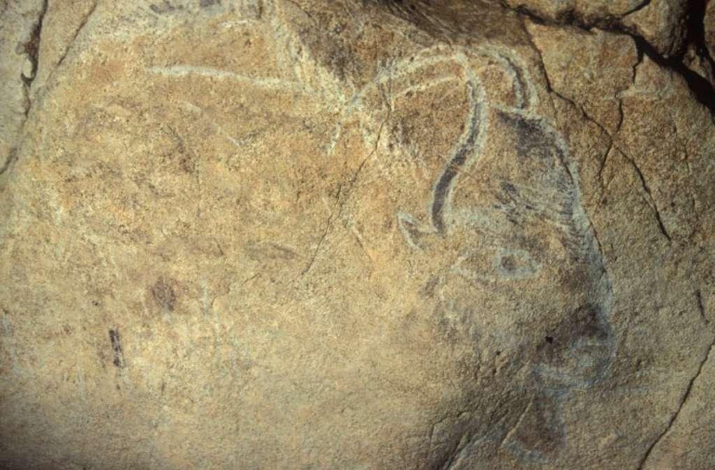 Bison peint et gravé de la grotte magdalénienne des Trois-Frères © Robert Bégouën