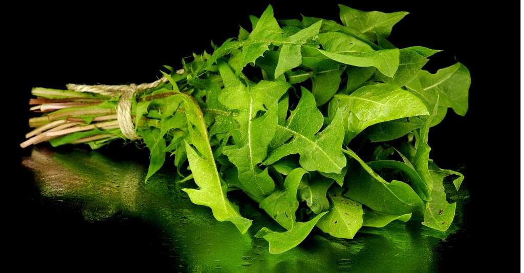 Le pissenlit « Vert de Montmagny » est une variété de cette salade. © De2marco, Shutterstock