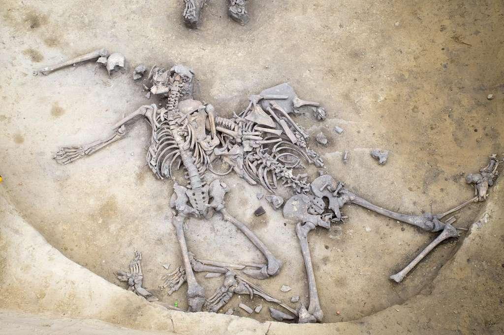 Les squelettes de la fosse présentaient tous de nombreuses fractures. © Michel Christen, Inrap