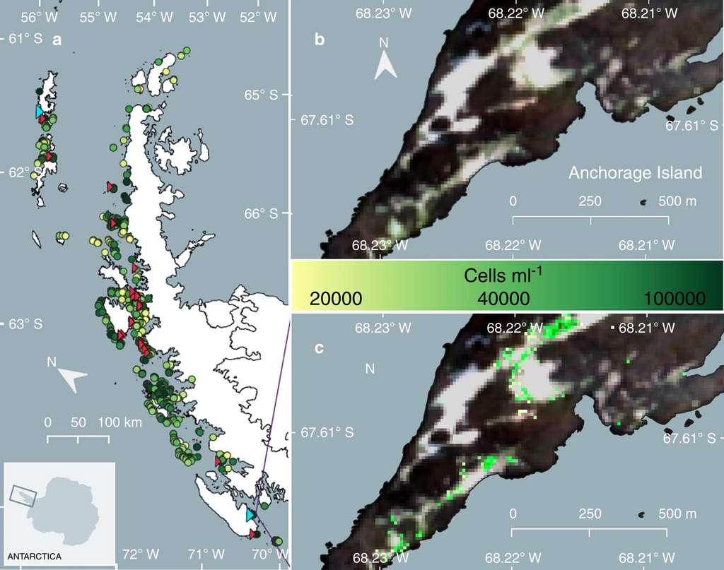 Vue d'ensemble des efflorescences d'algues vertes dans la péninsule Antarctique. L'échelle de couleur des points correspond à la densité en algue verte. Les triangles rouges sont des zones validées sur le terrain. © Gray et al. Nature Communications