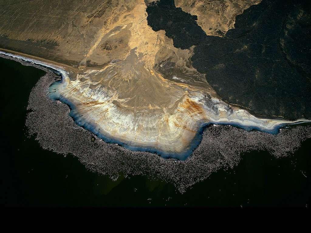 Flamants roses au bord du lac Logipi, vallée de Suguta, Kenya (2°15' N - 36°33' E). La blancheur du natron (carbonate de sodium) cristallisé sur la berge noire volcanique du lac Logipi contraste avec le bleu-vert des algues qui prolifèrent dans l'eau alcaline et salée. Vue du ciel, cette partie du rivage dessine curieusement une forme d'huître géante, bordée de quelques perles nacrées correspondant probablement à des résurgences d'eau douce au-dessus desquelles les flamants s'agglutinent. Ces échassiers viennent se nourrir dans les eaux peu profondes où foisonnent des algues et de petits crustacés, qui donnent à ces oiseaux leur couleur caractéristique. © Yann Arthus-Bertrand - Tous droits réservés