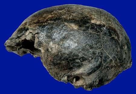 Homo erectus tardif de Sambungmacan (Java est). © Semenanjung, MQPI